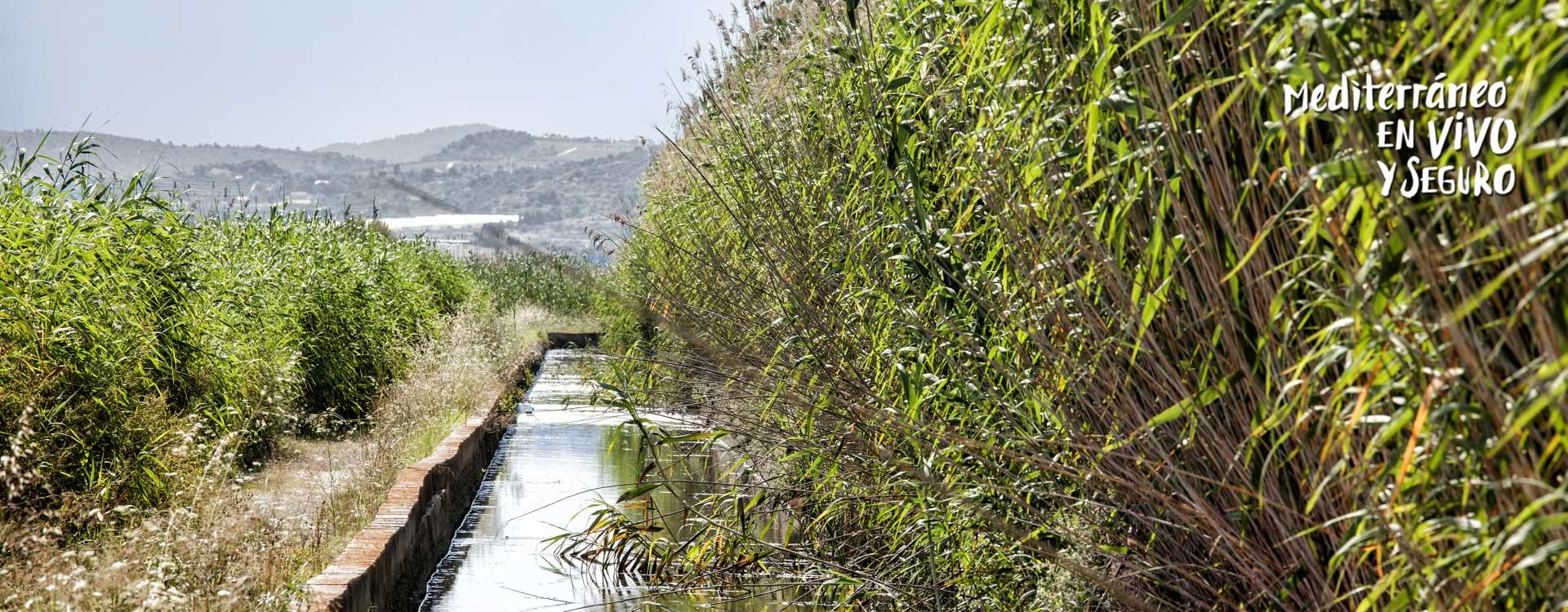 Image of La marjal dels moros, a wetland located in the south of the municipality of Sagunto